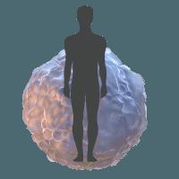 human islet spheroid model