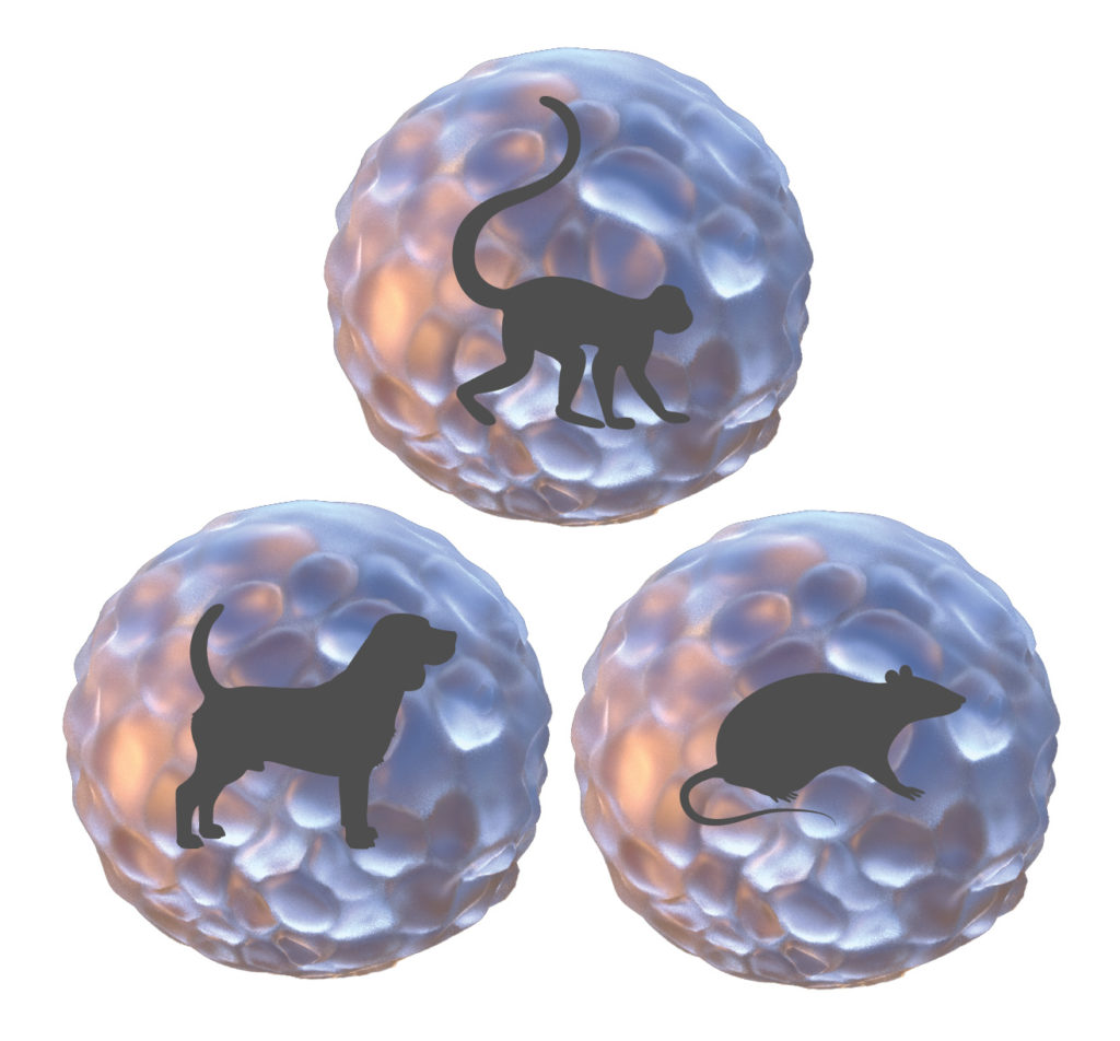 monkey dog rat liver spheroid models for tox testing